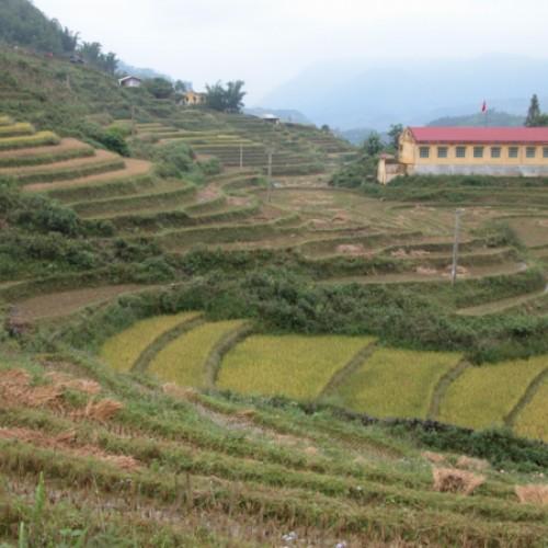 An den Hängen Nordvietnams: Reisfelder soweit das Auge reicht.